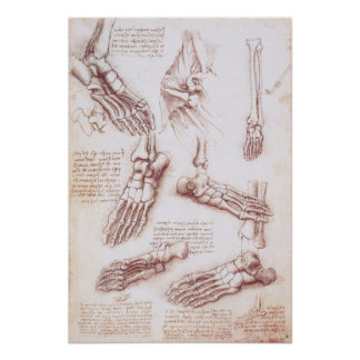 Human Anatomy Skeleton Foot Bones by da Vinci Poster
