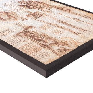 Human Anatomy Skeletons by Leonardo da Vinci Canvas Print