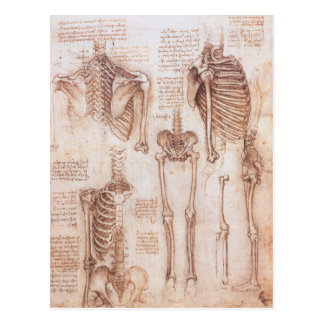 Human Anatomy Skeletons by Leonardo da Vinci Postcard