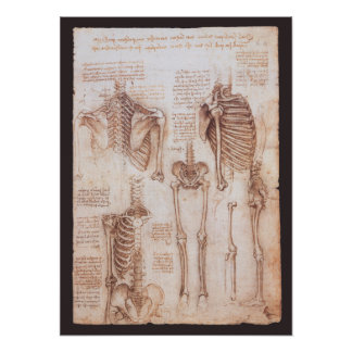 Human Anatomy Skeletons by Leonardo da Vinci Poster