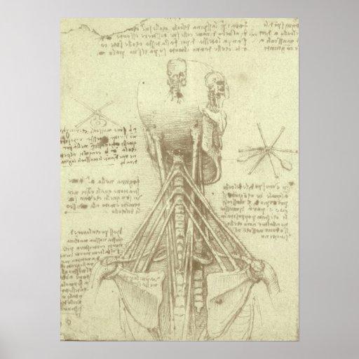 Human Anatomy Spinal Column by Leonardo da Vinci