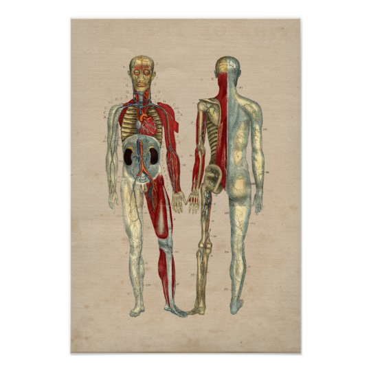 Human Arteries Heart Anatomy 1841 Print