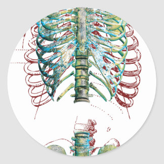 Human Body Rib Cage Classic Round Sticker