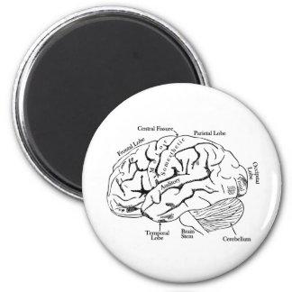 Human Brain 6 Cm Round Magnet