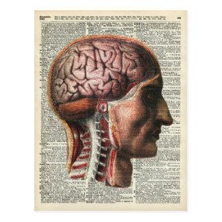 Human Brain Anatomy Postcard