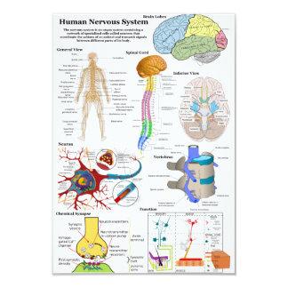 Human Brain and Central Nervous System Diagram 9 Cm X 13 Cm Invitation Card