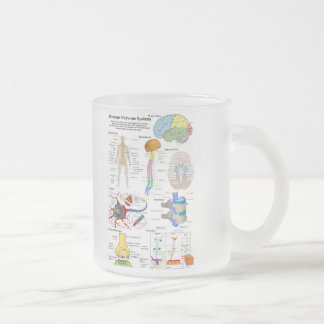 Human Brain and Central Nervous System Diagram Frosted Glass Coffee Mug
