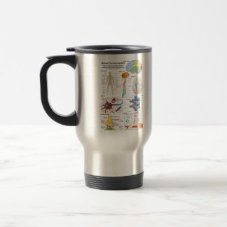 Human Brain and Central Nervous System Diagram Stainless Steel Travel Mug