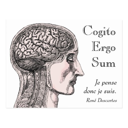 Human Brain Illustration Cogito Ergo Sum Postcards