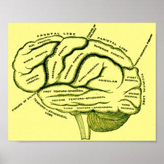 Human Brain Posters