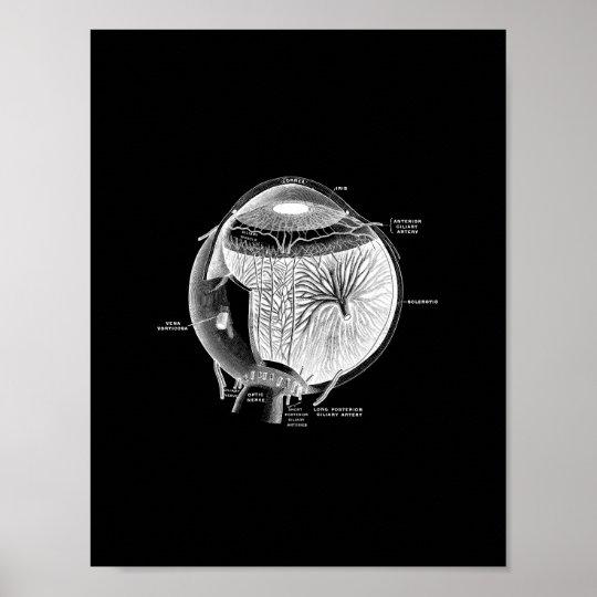 Human Eye Anatomy in Black and White print.