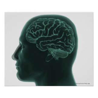 Human head in profile showing the brain poster