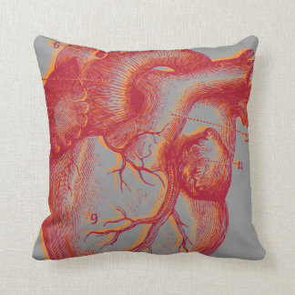 Human heart - anatomy cushions