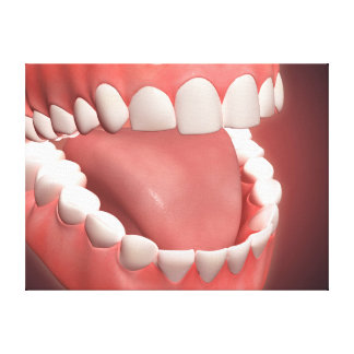 Human Mouth Open, Showing Teeth, Gums And Tongue Canvas Prints