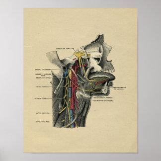 Human Neck Anatomy 1902 Vintage Print