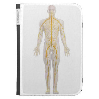 Human Nervous System 2 Cases For The Kindle