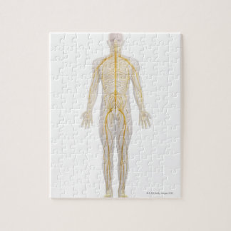 Human Nervous System 2 Jigsaw Puzzle