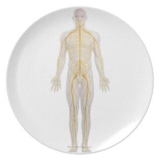 Human Nervous System 2 Plate