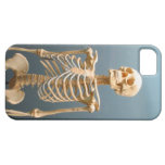 Human Skeleton Cover For iPhone 5/5S