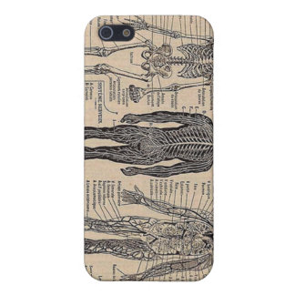 Human Skeleton Diagram iPhone Case