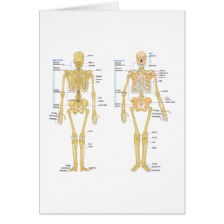Human Skeleton labeled anatomy chart Card