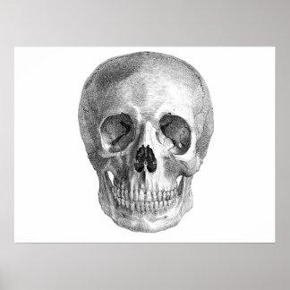 Human skull anatomy sketch drawing print
