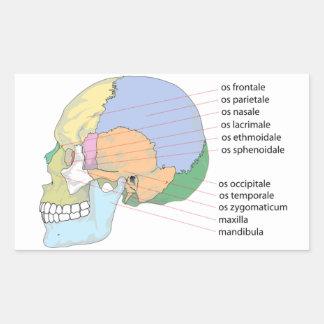 Human Skull Bone Name Chart Rectangular Sticker