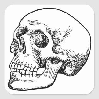 Human Skull Etching Square Sticker