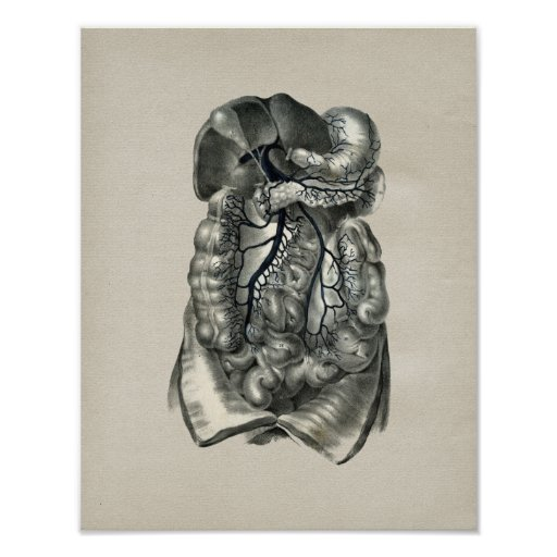 Human Veins Body Anatomy Vintage Print