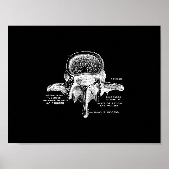 Human Vertebrae Anatomy in Black and White Print