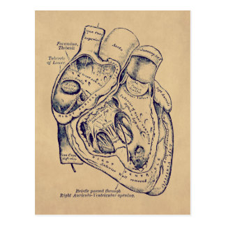 Human Vintage Anatomy Heart old paper effect Postcard