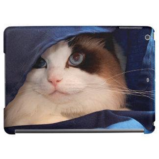 Humane Society cat 2