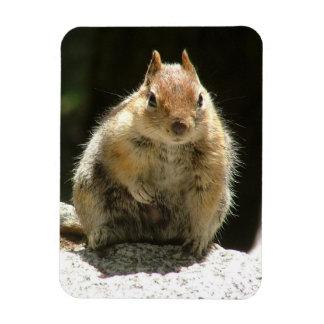 Humble Squirrel Magnet