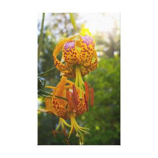 Humboldt Lily Canvas Prints