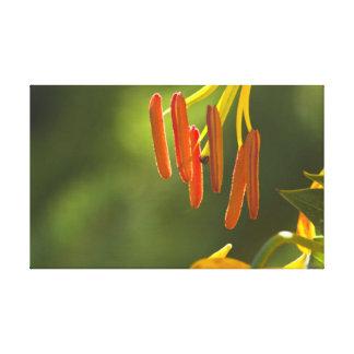 Humboldt Lily Stamens Canvas Print