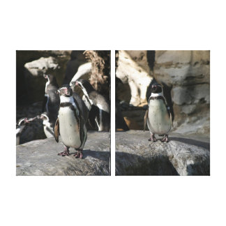 Humboldt Penguin Gallery Wrapped Canvas