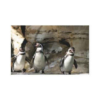Humboldt Penguin Canvas Print