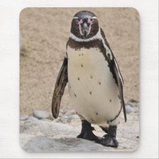 Humboldt Penguin Mauspad