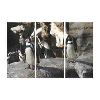Humboldt Penguin Stretched Canvas Prints