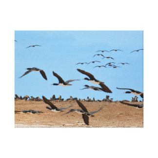 Humboldt Penguins and Flying Birds Canvas Print