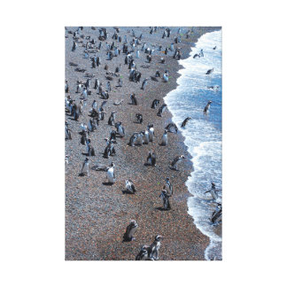 Humboldt Penguins at the Beach Canvas Print