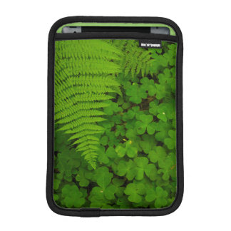 Humboldt Redwoods State Park iPad Mini Sleeve