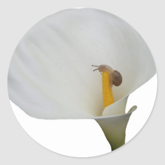 Humerous Snail on Lily Classic Round Sticker