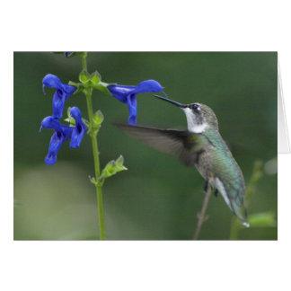 Humming Bird salvia sapphire blue 2 Greeting Card