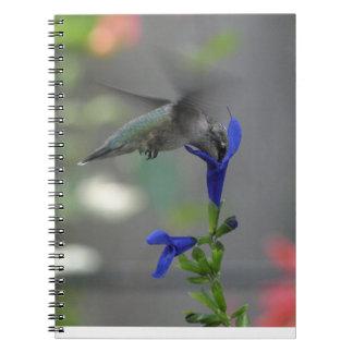 Humming Bird salvia sapphire blue notebook