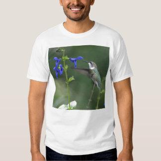 Humming Bird salvia sapphire blue shirt