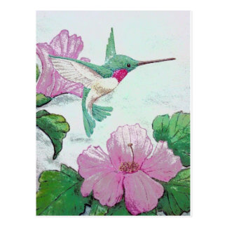 Humming bird wild pink flower hibiscus postcard