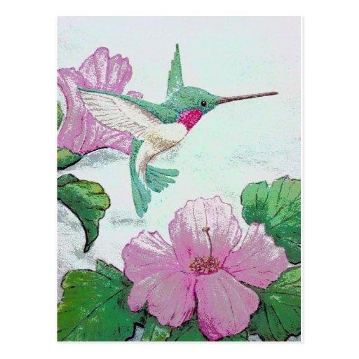 Humming bird wild pink flower hibiscus postcards