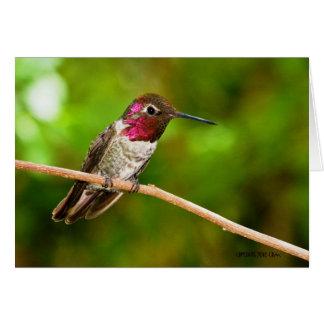 Hummingbird095 Cards