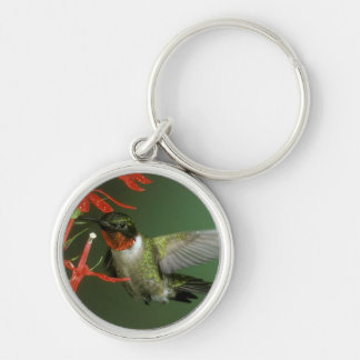 Hummingbird 2 key chain